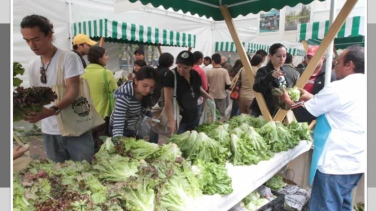 Domingo de Mercado del Trueque en el Bosque de Chapultepec