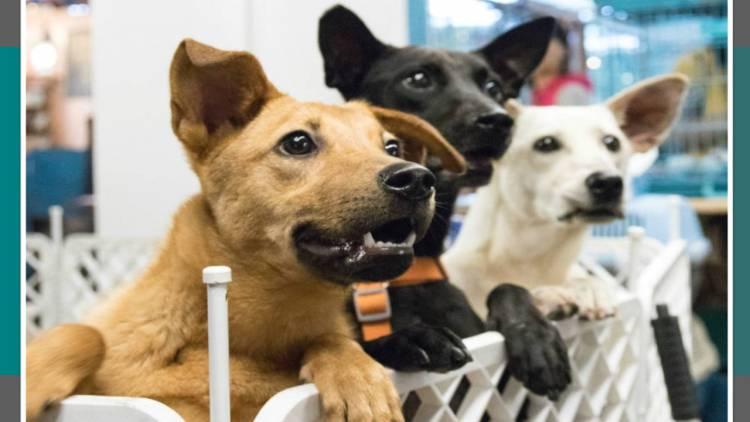 ¡Guau, guau! Dog Fest, el evento para que consientas a tu mejor amigo