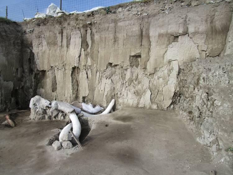 Descubren dos trampas para mamut en Tultepec; tienen huesos de 14 ejemplares