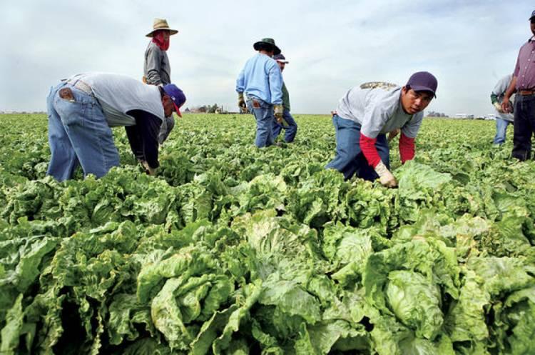 Mexicanos en EU y Canadá podrán denunciar abuso laboral