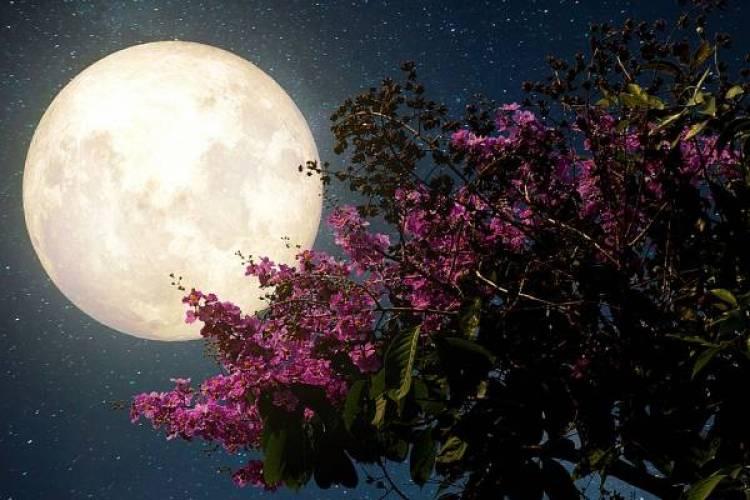 Hoy 7 de Mayo habrá Luna de Flores y Lluvia de Estrellas