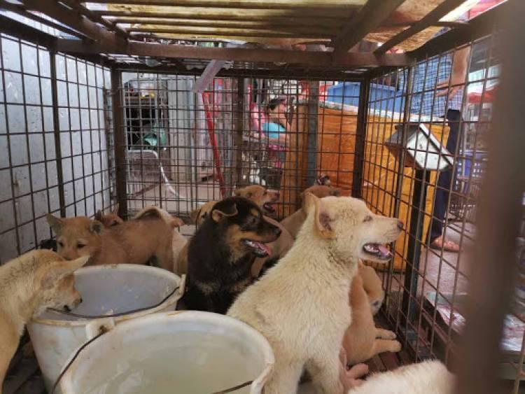 Pandemia arruina la 'Fiesta de la carne de perro' en China