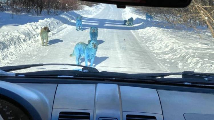 Encuentran perros azules brillantes cerca de fábrica abandonada en Rusia